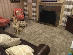 carpet-dog-fireplace